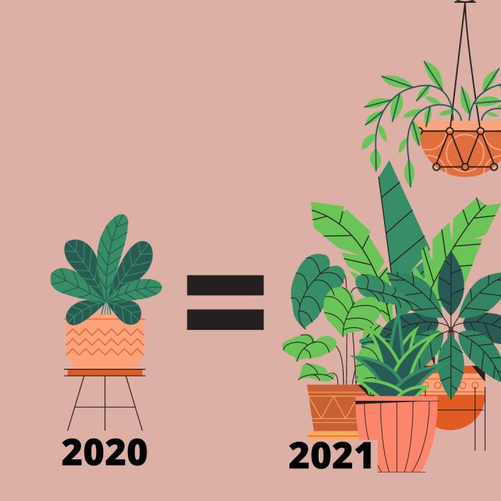 O que a sua planta precisa, para ser feliz?